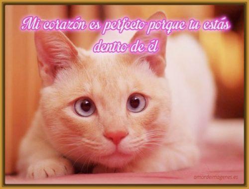 gatitos-tiernos-con-mensajes-de-amor