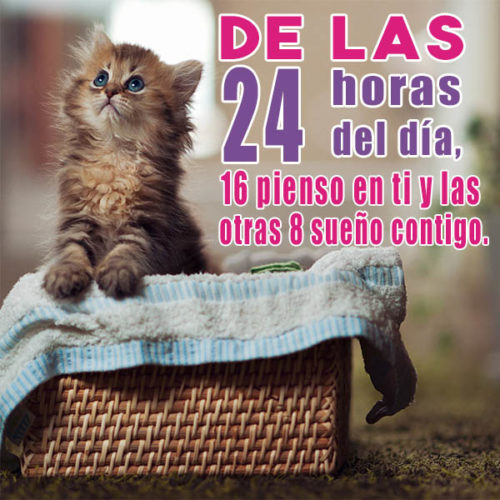 gatos-tiernos-con-mensajes-lindos