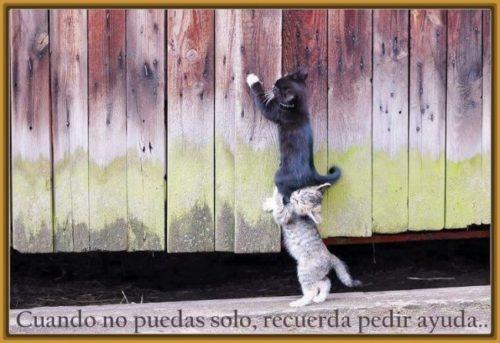 gatos-tiernos-con-mensajes-para-una-amiga