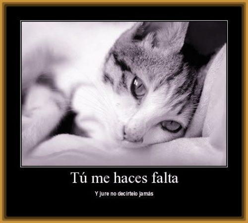 imagenes-de-gatitos-de-amor
