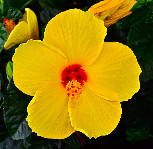 Im genes de flores con nombres tipos colores e - Clases de flores amarillas ...