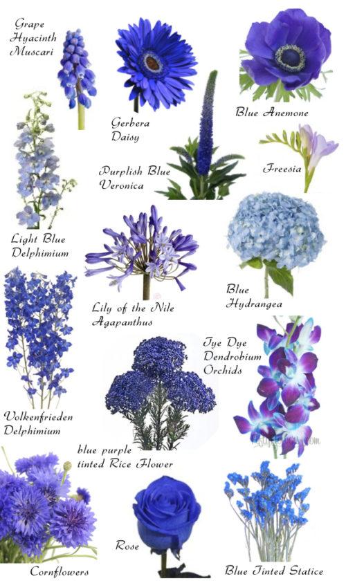 Imagenes De Flores Con Nombres Tipos Colores E Informacion