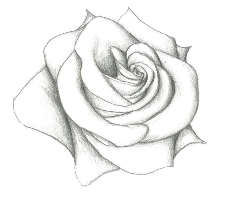 Dibujo A Lápiz De Rosa Información Imágenes