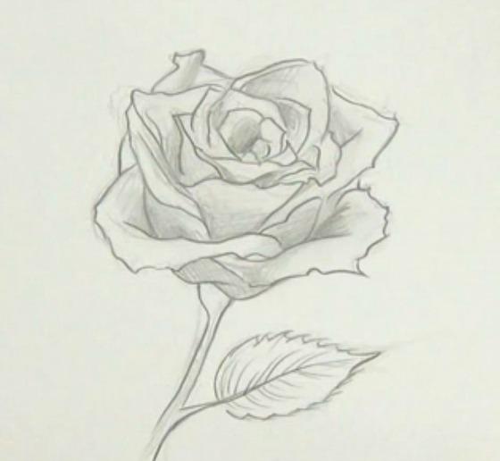 Como Dibujar Una Flor Información Imágenes