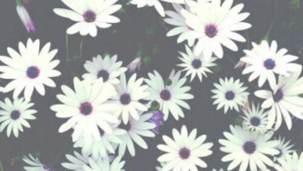 Portadas De Flores Tumblr