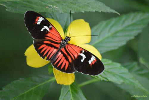 Imágenes De Mariposas (animadas, Bonitas, De Colores, Con