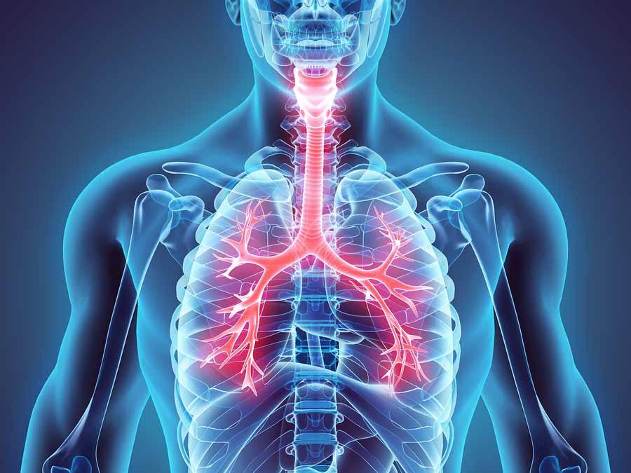 Órganos del Cuerpo Humano: Cuántos tiene, cuáles son ...