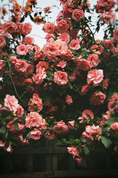 Hermoso Flores Fotos Tumblr T Fotografia Fotografia